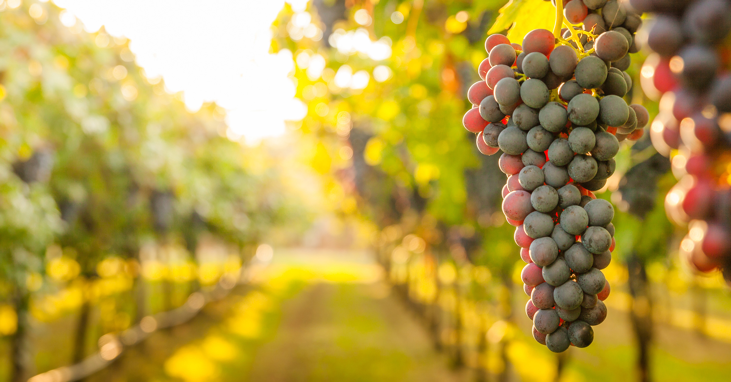 Carson helps wineries achieve LIVE Certification.